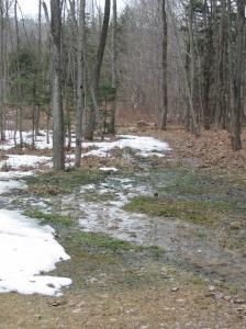 A stream of snow melt