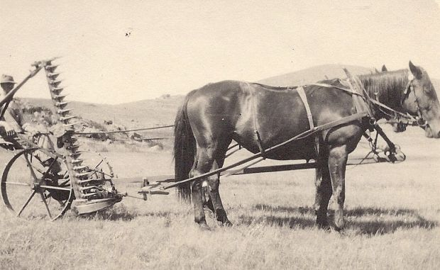 Though the automobile had been invented, nearly half the country still farmed, and the main implement was the horse